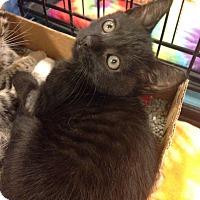 Adopt A Pet :: Fiona - Gainesville, FL