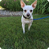 Adopt A Pet :: ROSCOE - Traverse City, MI