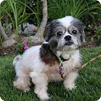Adopt A Pet :: YOGI - Newport Beach, CA