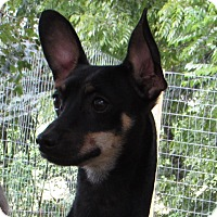 Adopt A Pet :: LENNON - Jackson, MO