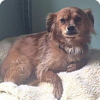 Adopt A Pet :: Sedona - Costa Mesa, CA
