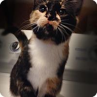 Adopt A Pet :: Whoopie - Bonner Springs, KS