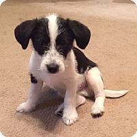 Adopt A Pet :: Charlie - Cross Roads, TX