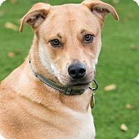 Adopt A Pet :: Jay - Fort Atkinson, WI