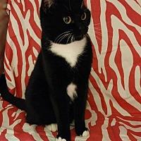 Adopt A Pet :: Reba - Baton Rouge, LA