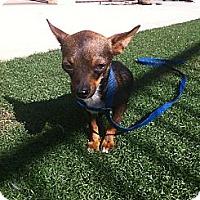 Adopt A Pet :: Sammy - Poway, CA
