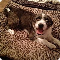 Adopt A Pet :: WRIGLEY - Encino, CA