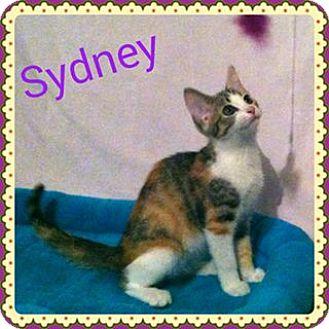 Calico Kitten for adoption in Newnan, Georgia - Sydney