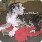 Adopt A Pet :: Bo #2