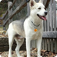 Adopt A Pet :: Sampson - Nashville, TN