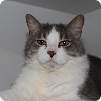 Adopt A Pet :: Pinky - Middletown, CT
