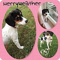 Adopt A Pet :: Merryweather - DOVER, OH