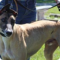 Adopt A Pet :: Charlie Tango