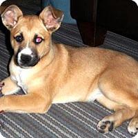 Adopt A Pet :: Stella - Gilbert, AZ