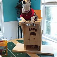 Adopt A Pet :: Tegan - Shallotte, NC