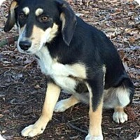Adopt A Pet :: Loretta - Harrisonburg, VA
