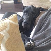 Adopt A Pet :: Boone - O'Fallon, MO