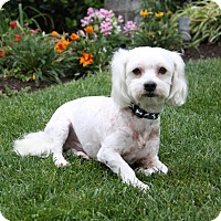 Adopt A Pet :: TRENTON - Newport Beach, CA