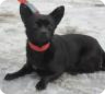 Chihuahua Mix Dog for adoption in Elkins, West Virginia - Zeta