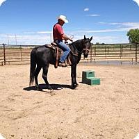 Adopt A Pet :: Charm (062516) - Boone, CO
