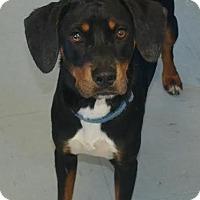 Adopt A Pet :: Austin - Willingboro, NJ