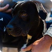 Adopt A Pet :: Mayfield - Alpharetta, GA