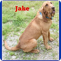 Adopt A Pet :: Jake - Elburn, IL