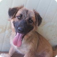 Adopt A Pet :: Jordan - Oakton, VA