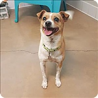 Chihuahua Mix Dog for adoption in Riverside, California - Rusty