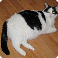 Adopt A Pet :: Moo - North Branch, MI