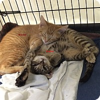 Adopt A Pet :: Brooke and Peyton - Freehold, NJ