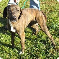 Adopt A Pet :: Bindi - Reeds Spring, MO