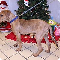 Adopt A Pet :: Gypsy - Lumberton, NC