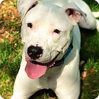Adopt A Pet :: Ghost - Eastpointe, MI