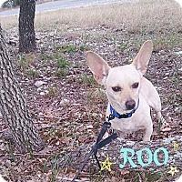 Adopt A Pet :: Roo - Milwaukee, WI