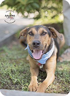 Hound (Unknown Type) Mix Dog for adoption in Kingwood, Texas - Loki