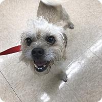 Adopt A Pet :: Obie - Sparta, NJ