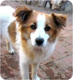 Dog Training Phelan Ca