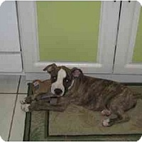 Adopt A Pet :: Tank - Fort Lauderdale, FL