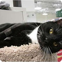 Adopt A Pet :: Jinx - Warminster, PA
