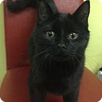 Adopt A Pet :: Brock - Byron Center, MI