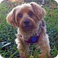 Adopt A Pet :: Peanut Butter - Homestead, FL