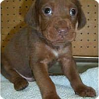 Adopt A Pet :: Demitrius - Novi, MI