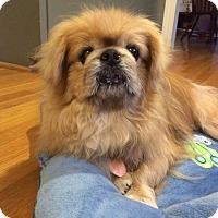 Adopt A Pet :: Henry - Chantilly, VA