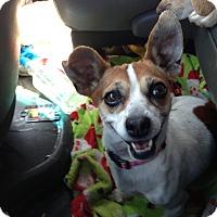 Adopt A Pet :: Haylee - Fowler, CA