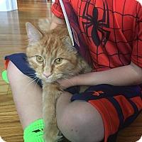 Adopt A Pet :: Arlo - Monroe, NC