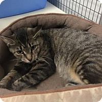 Adopt A Pet :: Roze - Fort Dodge, IA