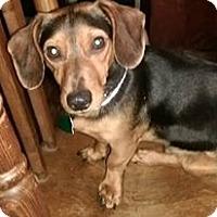 Adopt A Pet :: Jerry - Charlestown, RI
