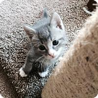 Adopt A Pet :: Zorro - Edmonton, AB