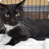 Adopt A Pet :: Clark - Orange City, FL
